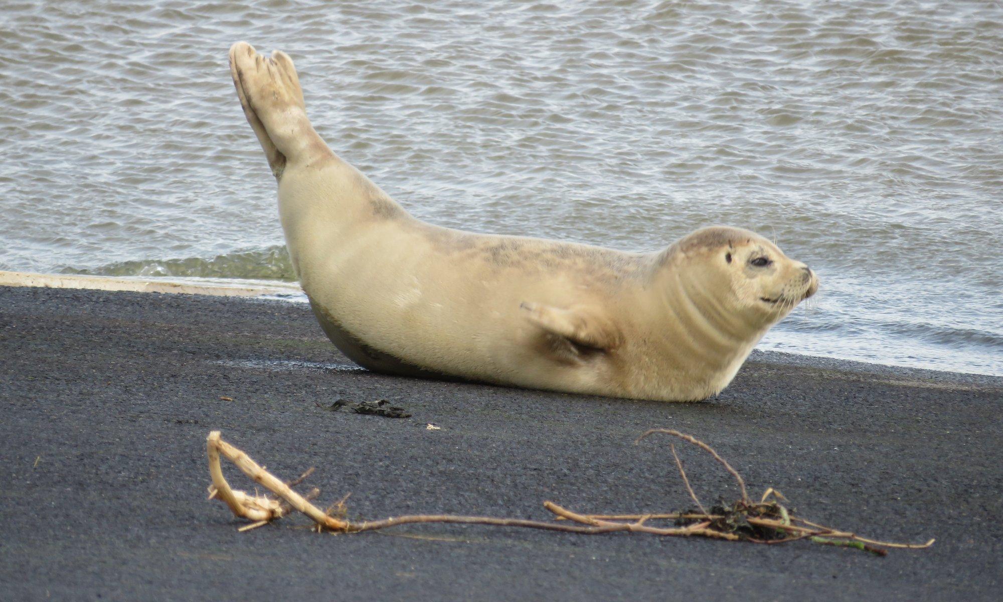 Zeehondenopvang Eemsdelta