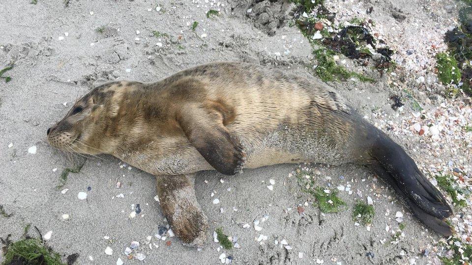 Nieuw akkoord over zeehondenopvang start vandaag